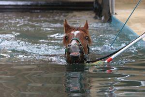 baignade thalasso pour chevaux